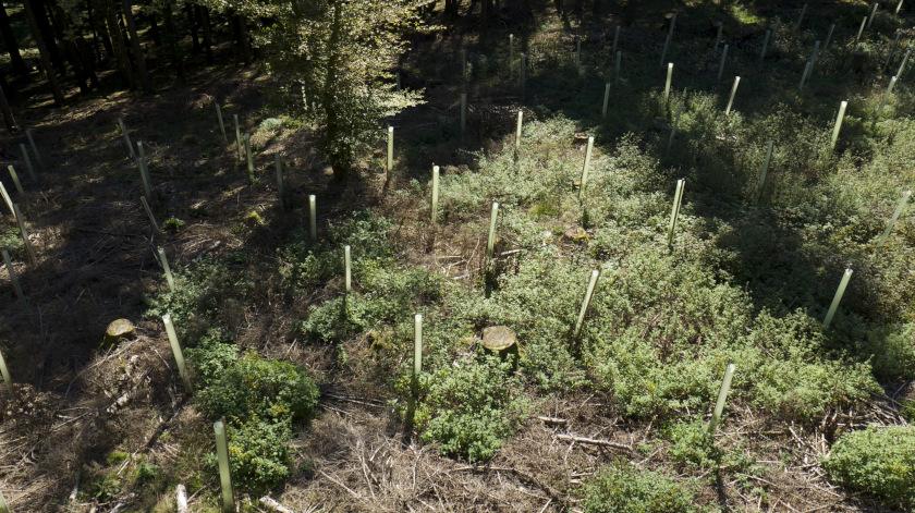 Gerolsteiner Zukunftswald