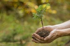 Gerolsteiner Zukunftswald: Von der Monokultur zum Mischwald