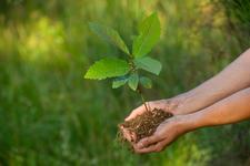 Gerolsteiner Brunnen setzt Engagement für Zukunftswald fort